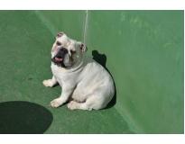 creche de cachorro preço em Cachoeirinha