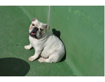 creche de cachorro preço no Brooklin