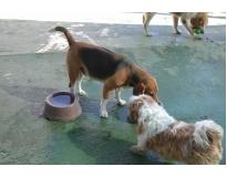 creche de cachorro no Cambuci