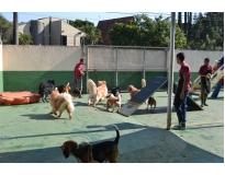 creche de cachorros na Vila Medeiros