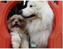 creche para cachorro em são paulo no Jardim Paulista