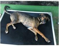 creche para cachorro em sp preço no Campo Grande