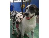 creche para cachorro em sp em Santa Cecília