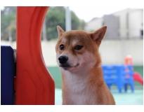 creche para cachorro preço Vila Barros