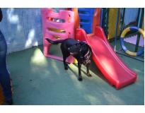serviços de creche para cachorro