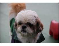 creche para cachorro em Higienópolis