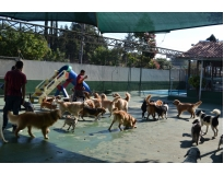creche para cães preço Água Chata