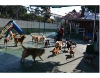 creche para cães em Aricanduva