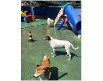creches para cachorro em sp Vila Augusta