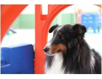 creches para cachorro no Jardim Iguatemi