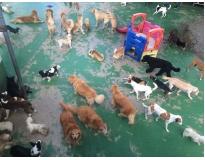 day care canino preço na Cidade Jardim