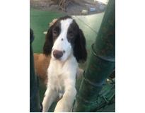 day care para cachorro preço na Vila Formosa