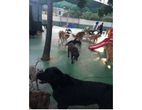 day care para cachorro na Vila Formosa