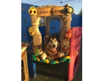 day care pet shops Itapegica