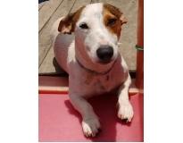 daycare para cães preço no Morumbi