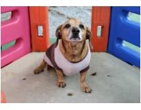 espaço para cães preço na Vila Gustavo