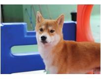 espaço para cães na Vila Medeiros