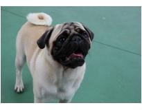 espaço para cão no Jabaquara