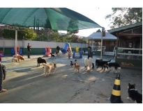 hospedagem de cachorro preço Monte Carmelo