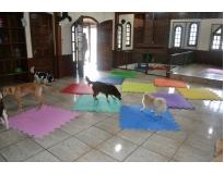 hospedagem de cachorro no Jaguaré