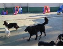 hospedagem de cachorros Monte Carmelo