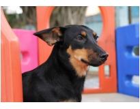 hospedagem de cães preço no Ipiranga