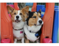 hospedagem de cães na Sé