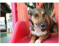 hotéis creche para cães no Ibirapuera