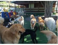 hotéis de cachorros Água Chata