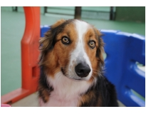 hotéis de cães preço na Vila Curuçá