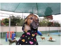 serviços de hotel para cães