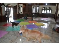 hotéis fazenda para cachorros no Bairro do Limão