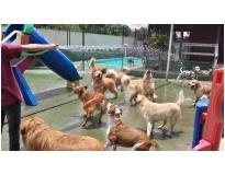 hotéis para cachorro Água Azul