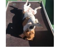 hotéis para cachorros diária em Glicério