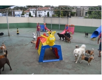 hotéis para cachorros em são paulo no Butantã