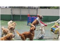 hotéis para cachorros em sp em Aricanduva
