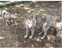 hotéis para cachorros no brooklin Macedo