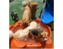 hotéis para cachorros sp na Água Branca