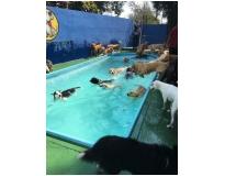 hotéis para cachorros em Glicério