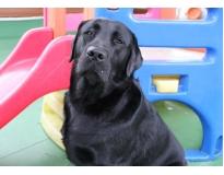 hotéis para cães em são paulo na Vila Andrade