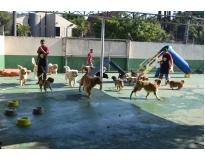 hotéis pra cachorros em Santa Cecília