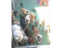 hotéis spa para cães Jardim Aracília