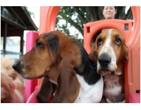 hotel creche de cães preço na Vila Guilherme