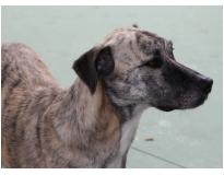 hotel creche para cães preço em Moema