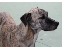 hotel creche para cães preço Vila Augusta