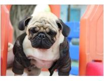 hotel creche para cães em São Domingos