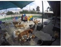 hotel de cachorro preço no Campo Belo