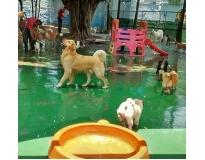 hotel de cachorro no Ibirapuera