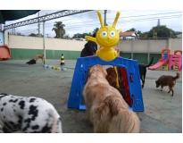 hotel fazenda para cachorro preço na Vila Maria