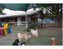 hotel fazenda para cachorro Monte Carmelo